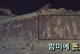 Xác tàu nghi chứa 5.500 thùng vàng ở ngoài khơi Hàn Quốc