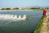 7 kinh nghiệm xử lý ao nuôi nuôi thủy sản sau mưa lũ
