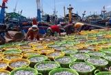 Mùa cá về, ngư dân Ninh Thuận trúng hàng trăm triệu mỗi đêm