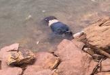 Hà Tĩnh: Hoảng hồn phát hiện thi thể người phụ nữ nổi trên hồ Kẻ Gỗ