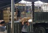 Giá gạo tăng nhẹ sau nhiều ngày mưa bão