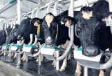 Vinamilk cho ra đời dòng sữa tươi A2 đầu tiên tại Việt Nam