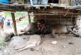 Hà Tĩnh: Đang tắm cho trâu, người đàn ông bất ngờ tử vong