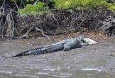 Người đàn ông tự tay cầm mồi cho cá sấu khổng lồ ăn