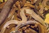 Hành khách Đức đưa 20 con rắn lên máy bay