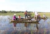 Trải nghiệm thú vị du lịch mùa nước nổi ở Đồng Tháp