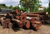 Đội trưởng kiểm lâm nhận hàng trăm triệu của trùm gỗ lậu Phượng