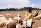 Vi vu Vũng Tàu chụp ảnh siêu đẹp ở đồng cừu Suối Nghệ