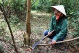 Mở lại phiên xử vợ chồng kêu oan tội hủy hoại rừng