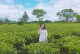 7 đồi chè 'sống ảo' đỉnh cao dành cho dân thích xê dịch ở Việt Nam