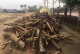 Chính quyền xã thanh lý 'gỗ tặc' không qua đấu giá