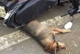 Hà Tĩnh: Chó lạ chạy vào chợ cắn bị thương nhiều người
