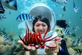 Sửng sốt trước vẻ đẹp rực rỡ của những rạn san hô đẹp nhất Việt Nam