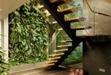 Làm vườn giếng trời 200 triệu, sau 3 tháng chủ nhà còn lại mớ lá rụng