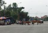 Hà Tĩnh: Vấn nạn