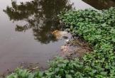 Hà Tĩnh: Kinh hoàng phát hiện thi thể người đàn ông trên kênh nước