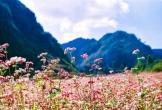 Kinh nghiệm từ A đến Z cho bạn khi đến Hà Giang ngắm hoa tam giác mạch