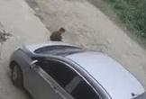 Bé trai thoát chết khi bị cuốn vào gầm ôtô