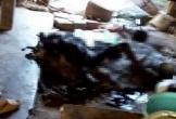 Trời lạnh quấn chăn ngủ bên bếp lửa, một phụ nữ bị chết cháy