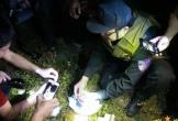 Trắng đêm bảo vệ hiện trường vụ nhóm vận chuyển ma túy dùng súng cố thủ ở Hà Tĩnh
