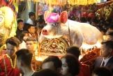 17 'ông lợn' nặng hơn 200 kg làm lễ tế Thành hoàng