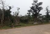Hà Tĩnh: Vườn uơm cây cảnh trị giá bạc tỷ đầu năm mới bị kẻ gian đổ muối, sát hại