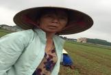 Nhiều người dân Hà Tĩnh khốn đốn vì đất trồng lạc bị ngập úng