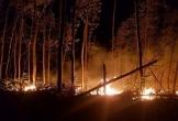 Cháy rụi hơn 5 ha rừng tràm ở Hói Dừa