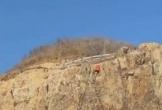 Nam thanh niên rơi tự do khi leo tay không lên đồi Con Heo ở Vũng Tàu