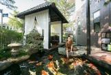 Ngắm biệt thự hồ cá Koi triệu đô của Nhật Kim Anh