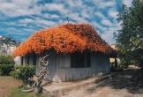Nhà gỗ mái hoa rực rỡ trên cung phượt Đà Lạt