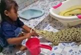 Nín thở xem cảnh bé gái ngồi đánh răng cho cá sấu