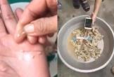 Không còn mẫu thịt nghi nhiễm sán lợn ở trường học Bắc Ninh để điều tra