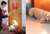 Chó cưng quyết chặn cửa, không cho cô chủ đi lấy chồng