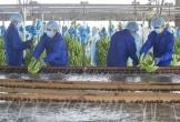 """Tỷ phú Trần Bá Dương """"bắt tay"""" cùng bầu Đức xuất khẩu lô chuối hơn nửa triệu USD"""