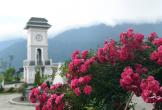 Hàng triệu hoa tím khoe sắc trên triền đồi ở Fansipan