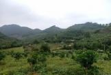 UBND huyện Thạch Hà có buông lỏng quản lý cho sai phạm tồn tại?