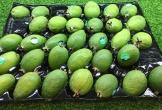 Một cân ổi dứa đổi 40kg ổi Việt: Cũng chỉ dám tráng miệng 1 lần cho biết