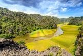 Địa điểm ngắm 'Mùa vàng Tam Cốc' đẹp nhất Ninh Bình