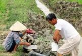 Nắng nóng, khô hạn ảnh hưởng đến các địa phương