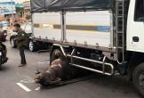 Trâu đực nặng hơn 400kg bị xe tải tông tử vong trên Quốc lộ 20