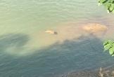 Phát hiện thi thể người phụ nữ nổi trên sông Lam