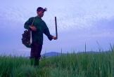 Độc đáo nghề thả trúm lươn đồng ở Hà Tĩnh