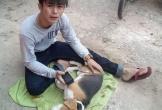 Loạt ảnh khiến bất kỳ ai nuôi chó cũng muốn rơi nước mắt: Chàng trai đau đớn chứng kiến người bạn 4 chân ra đi
