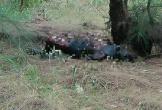 Điều tra vụ người đàn ông được phát hiện chết cháy sau vườn nhà