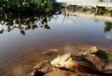 Nước sông ô nhiễm, hơn 4.000 hộ dân ở Hà Tĩnh thiếu nước sạch