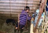 Phát hiện hầm 'bí mật' nhốt chó trộm cắp trong đường dây 'cẩu tặc' quy mô cực lớn