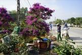 Kỳ hoa dị thảo khoe sắc đón Xuân