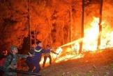 Hà Tĩnh chi hơn 2 tỷ đồng phục hồi hơn 50ha rừng bị cháy