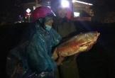 Đường phố biến thành sông, người Hà Tĩnh ra đường bắt cá trong đêm